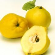 Айва-вкусно и полезно