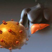 О сроках лечения гепатита С