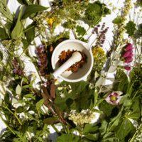 Рецепты из лекарственных растений